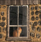 Title: The cat in the window