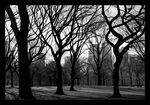 Title: The Trees of Central ParkNikon D40X