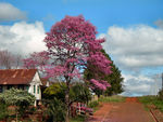 Title: Pink tree