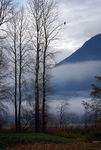 Title: Fog in the Valley