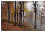 Title: Fog And AutumnNikon  D200 with MB-200