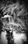 Title: reflection in ...BWNikon D40X