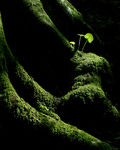 Title: New Life in the Forest
