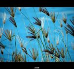 Title: Grass against blue water