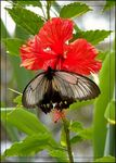 Title: Butterfly on a red flower