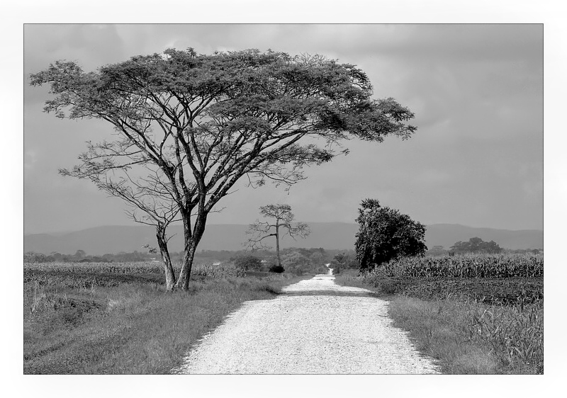 pastoral side of Belize ( b&w theme )