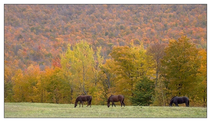 The pastoral side of Vermont