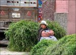 Title: Fresh hay for saleSony DSC-H50