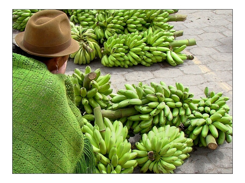 Selling bananas  is her trade