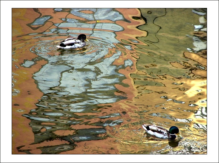 two ducks in a 'splash' of colors