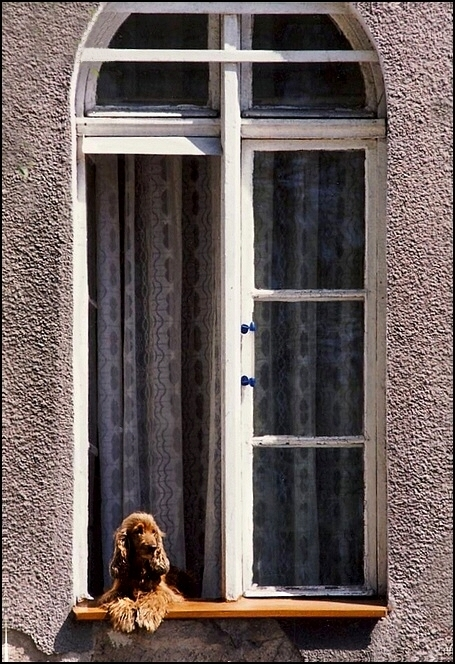 *Dog at the window*