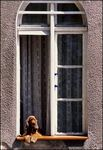 Title: *Dog at the window*