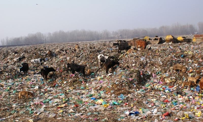 Piles of Garbage Over Miles of Land!
