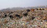 Title: Piles of Garbage Over Miles of Land!