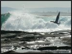 Title: Big Waves 3Lumix DMC-FZ7