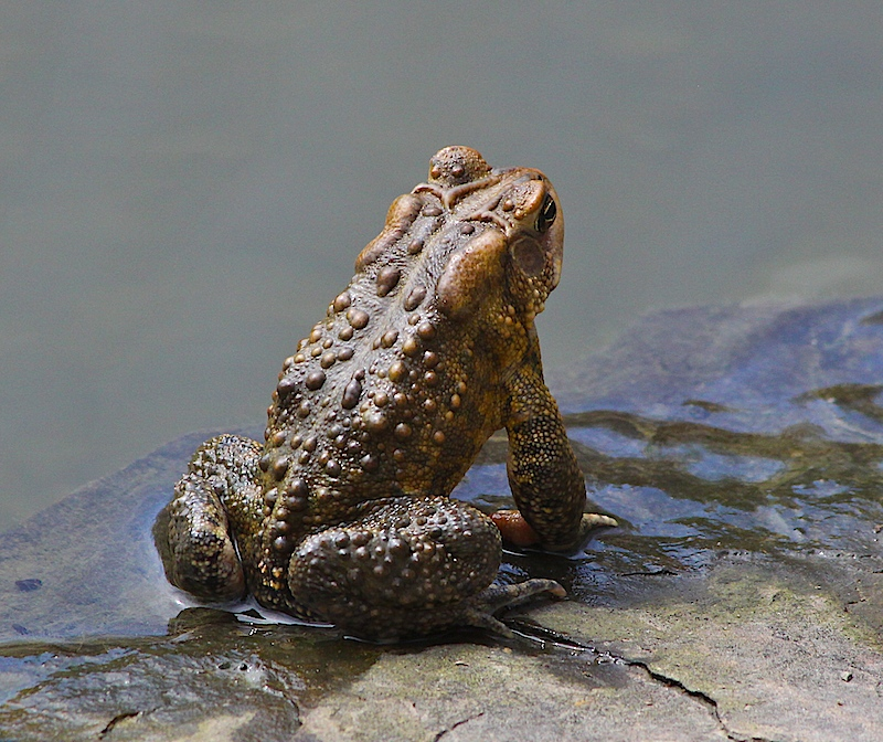 Toad Topography
