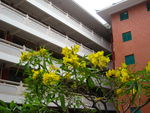 Title: The flowers and the building
