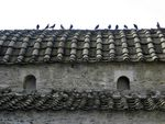 Title: pigeons on roof tiles