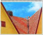 Title: Stork's nest on roof