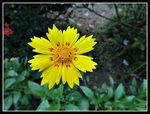 Title: Yellow.....