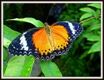 Title: A butterfly...