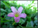 Title: A small wild flower....
