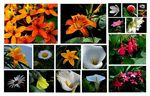 Title: Flowers from Malaysian Highlands