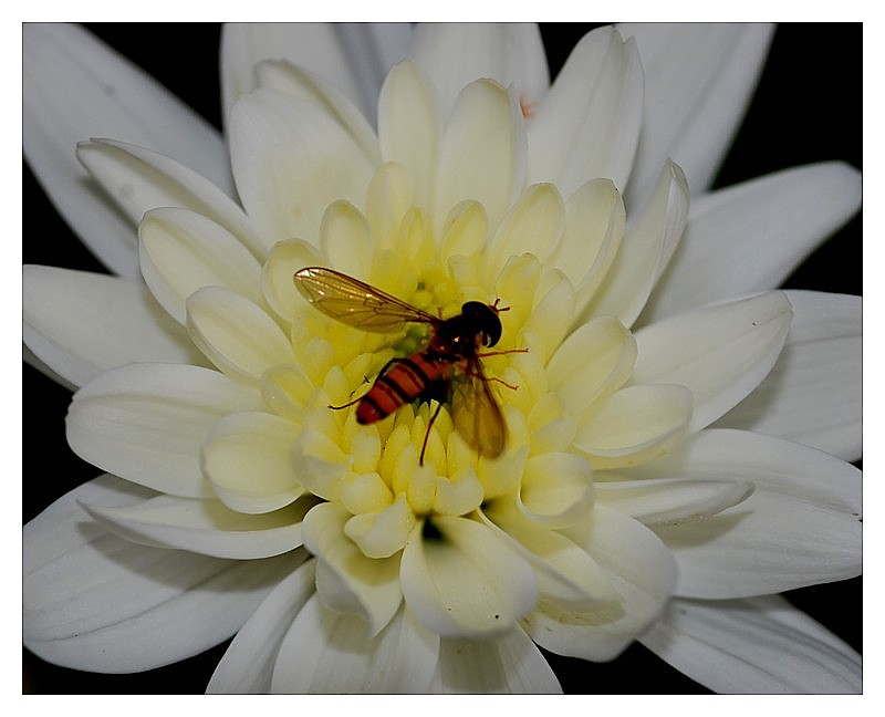 A Fly  for a Flower