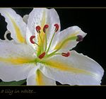 Title: A lily in white.....panasonicDMC TZ3