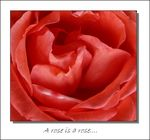 Title: The magic of a rose....panasonicDMC TZ3