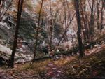Title: In the forest