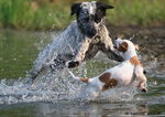Title: Playing dogsCanon 20D