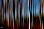 Title: Trees