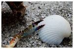 Title: Shell and CrabNikon D40 DSLR