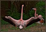 Title: Flamingo Flasher -