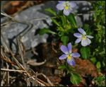 Title: Guess there ARE violets in S.C.Nikon D90