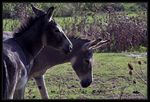 Title: there are sometimes happy donkeysNikon D90