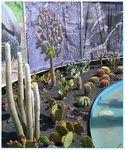 Title: In the life, there are cacti!!!!