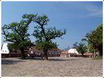 Title: Trees of Szentendre
