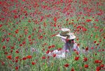 Title: Poppy ArtistPENTAX OPTIO 750Z