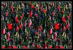 Title: Torn Tulips