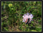 Title: beetle :)Canon Power Shot S1 IS