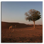 Title: Lone Camel