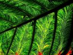 Title: A Piece of Leaves