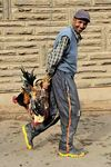 Title: man with chickens