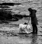 Title: Walking the Dog