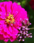 Title: Bee at workPentax K1