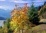 Title: Fall contrasts