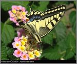 Title: Old World Swallowtail from different POVOlympus C-5060WZ