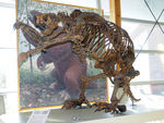 Title: Beringia Museum - Giant Ground SlothNikon D300